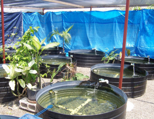 Jamaican ornamental fish project building bridges for Jamaica fish market